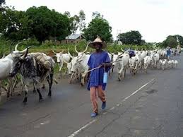 Image result for open grazing ONDO STATE