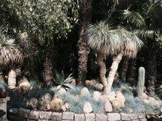 Auch der Palmengarten wird von den Anwohnern gepflegt