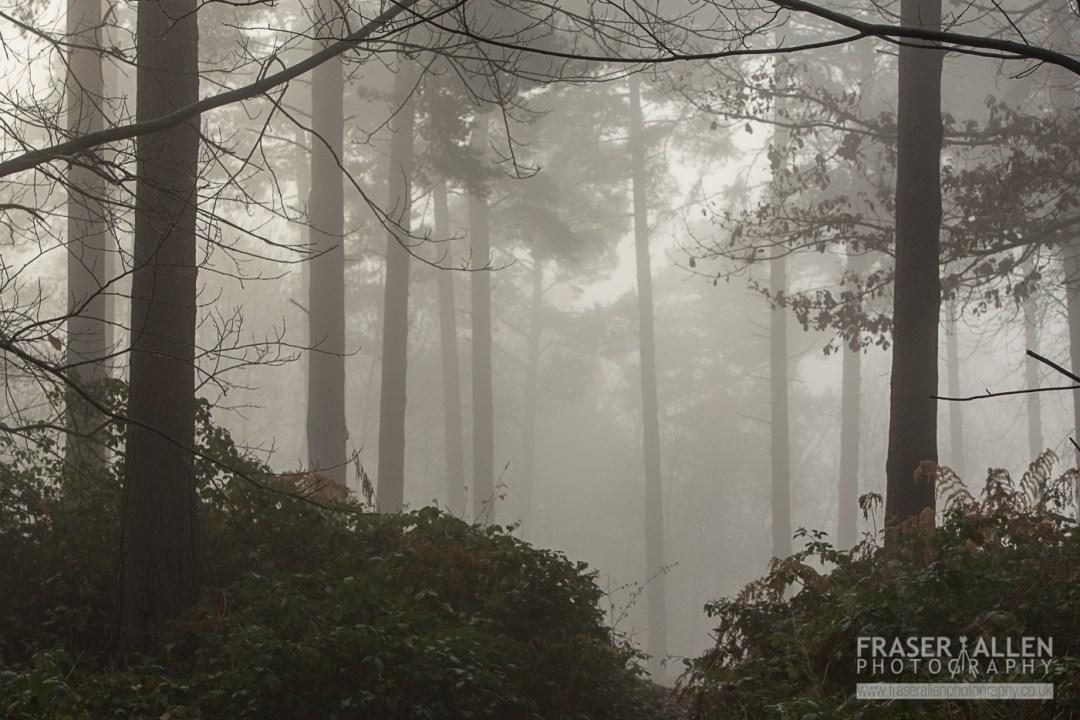 It's foggy outside, so grab that camera