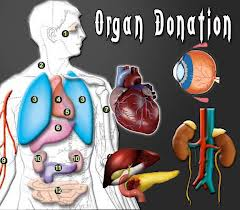 Can Parsis donate organs or the body after death? – Frashogard