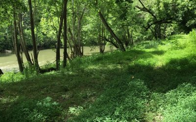 266 Acres in Tazewell, TN