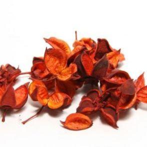 Confezione baccelli di cotone (cotton pods) 150 g – Rosso