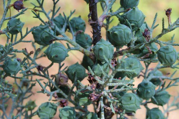 Fratelli zuccolotto vendita piante - Fratelli ingegnoli piante ...