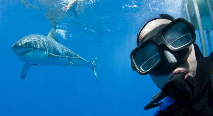 selfie con lo squalo