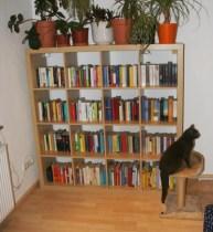 Katze vor dem Bücherregal