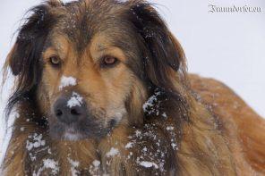Flashback 2012 - Balu im Schnee