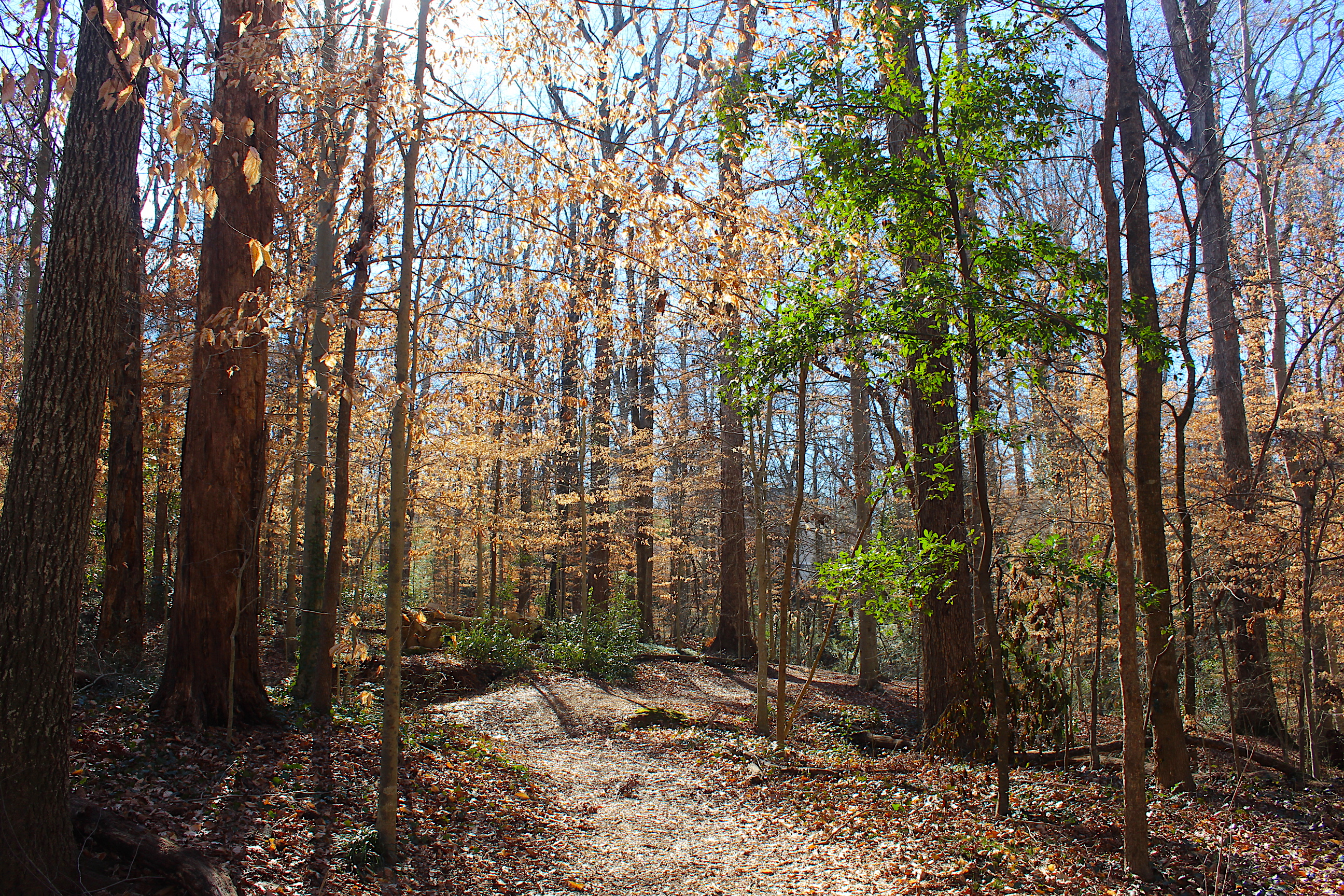 If documents are required for the sale of your property or for any other reason, please contact resales@damctx.com. Secrets Of The Winter Woods A Walk In Frazer Forest With Ecoaddendum