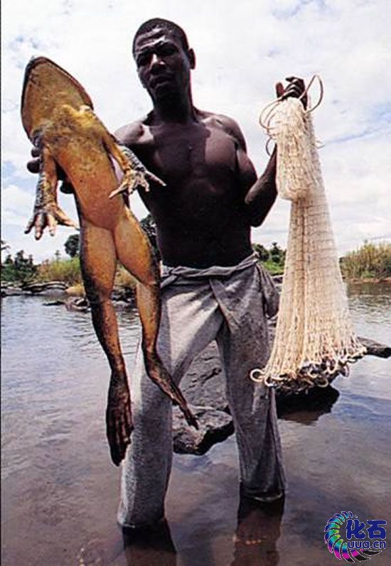 giant froggy caught