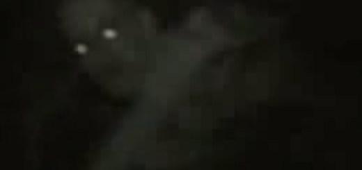 Fallen angel video