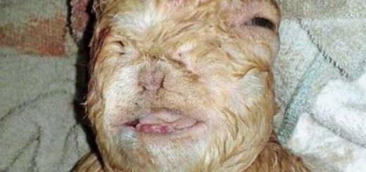 Half goat human hybrid found