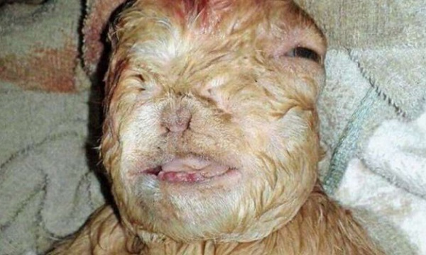 goat baby mutation