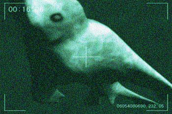 Giant underwater humanoids found
