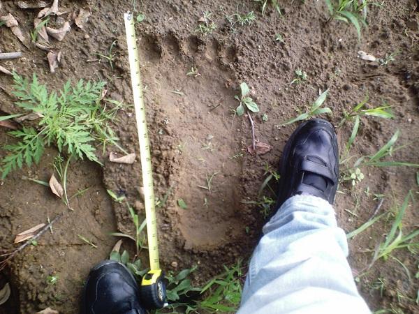 Bridgewater Bigfoot