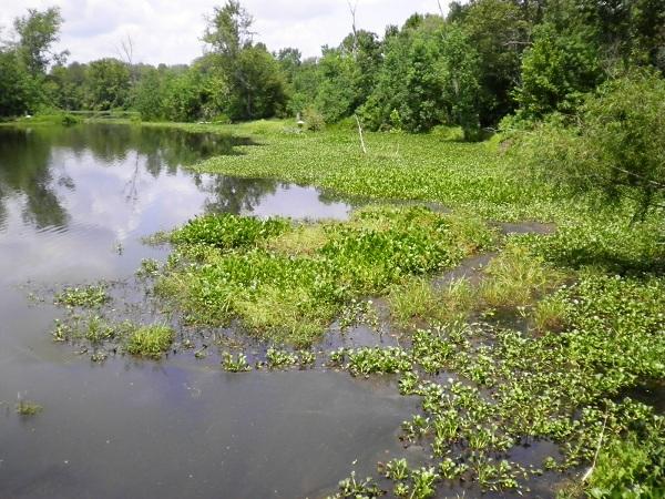 Hockomock Swamp