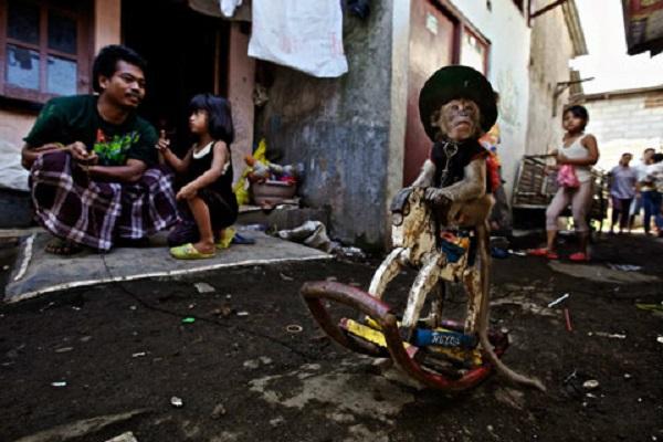 Monkey in street