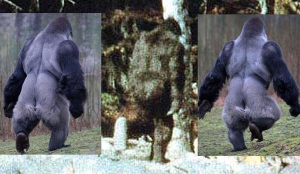bigfoot compared