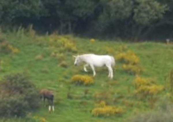 unicorn-grazing