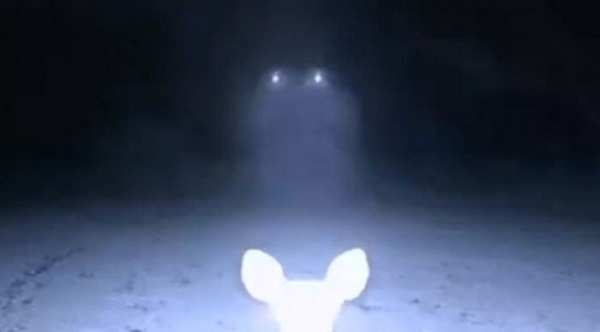 deer-ufo-caught-on-trail-camera