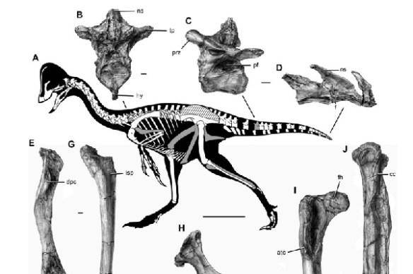dinosaur-chicken-from-hell