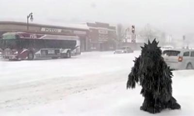 Pot Sasquatch captured on camera in Springfield