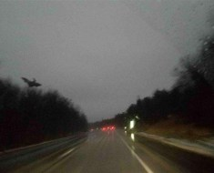 The Jersey Devil photograph taken
