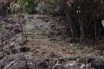 Ancient Cambodian staircase discovered