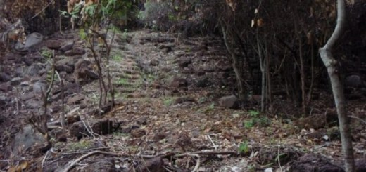 Ancient staircase to nowhere found in Cambodia