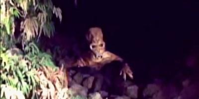 Cave creature video Columbia