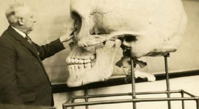 Giant skull in 1900's museum