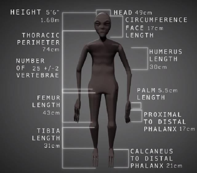 Mummified humanoid alien scale size