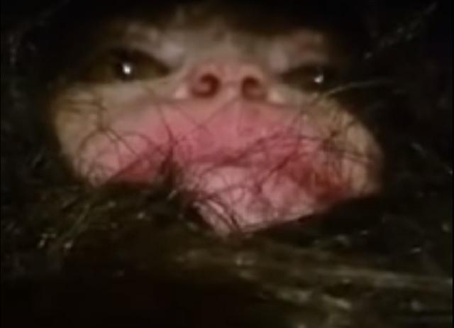 Bizarre baby creature found in Azerbaijan
