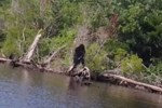 Sasquatch in Albemarle county Virginia