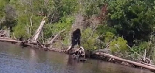 Southern Sasquatch encountered by several officers in Virginia