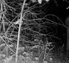 Robed figure standing up in woods