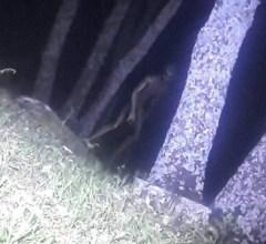 Alien photograph in Argentina park