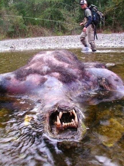 Dead werewolf discovered in shallow water