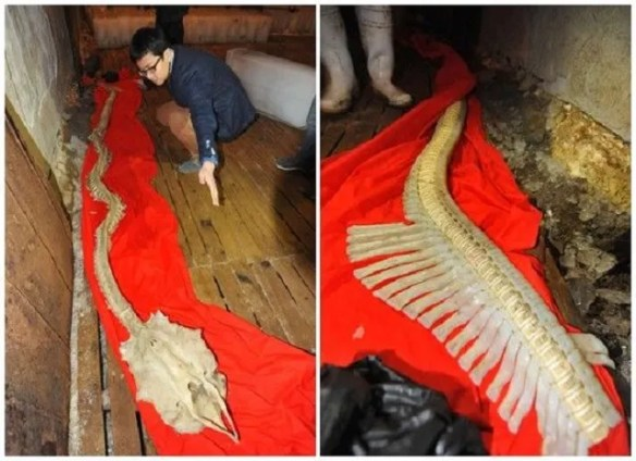 Dragon skeleton remains found in China