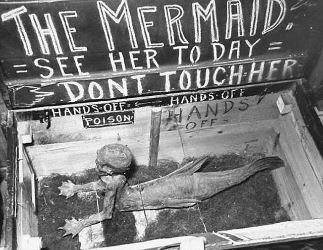 Fiji mermaid display