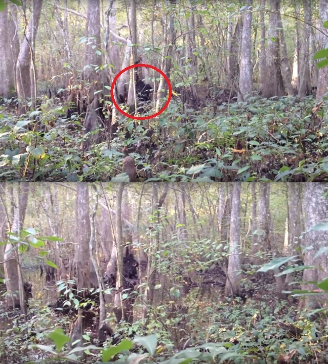 Josh Highcliff Bigfoot sighting