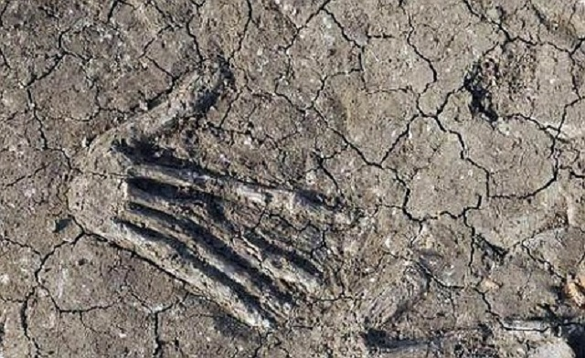 Large hands found in Egypt dig