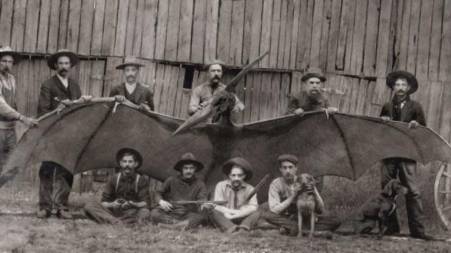 Thunderbird cowboys from Arizona