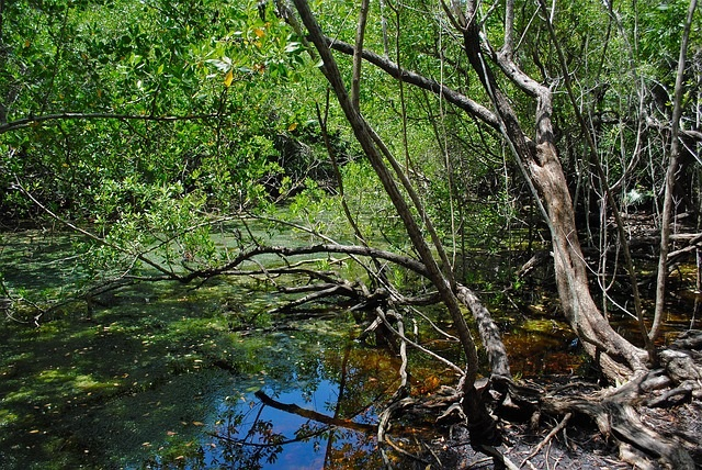 Florida swamp woods