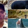 Dylan McWilliams attacked by bear snake and shark
