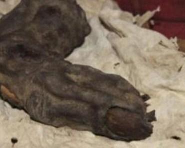 Mummified Foot Long Finger Found