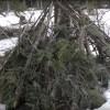 Bigfoot Hut Found