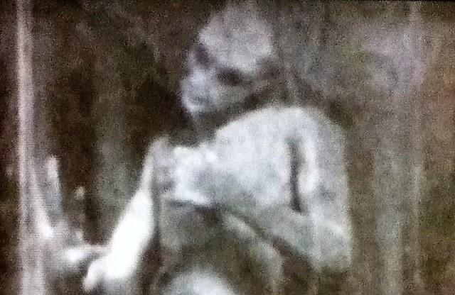 P.T. Barnum Mermaid