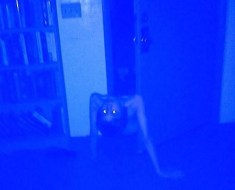 Possessed boy crawls from closet door