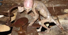 Small alien creature found in Mexican barn