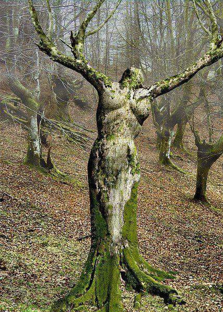 Tree woman in forest