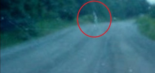 Dirty Car Window Or Ghost Crossing The Road?